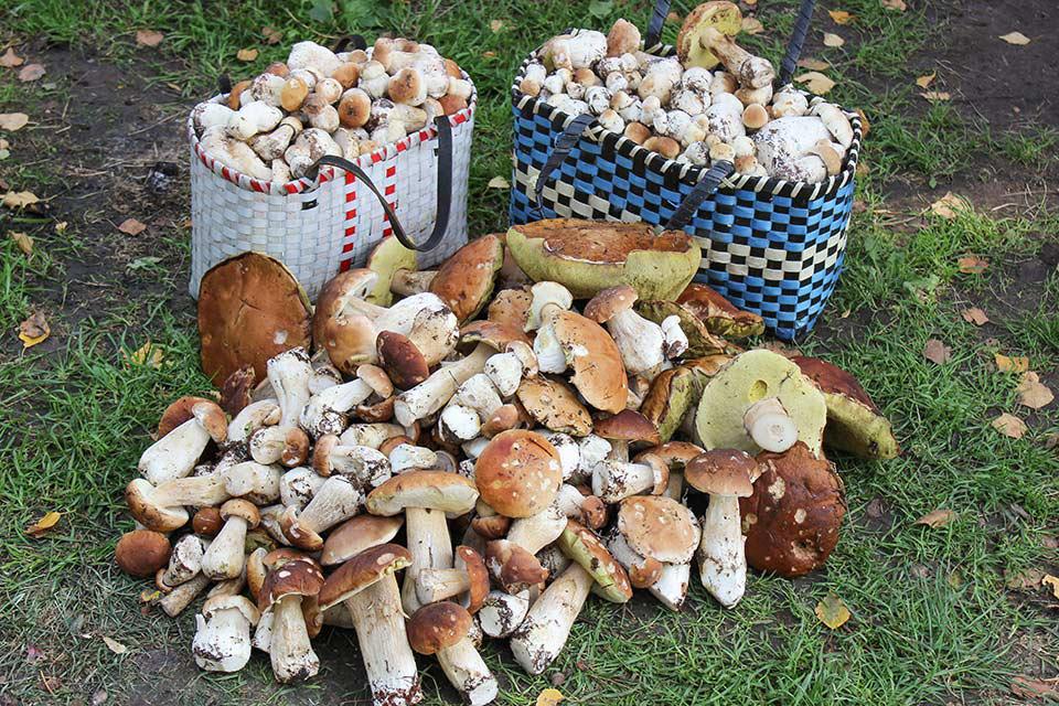 грибы Могилевщины фото 2