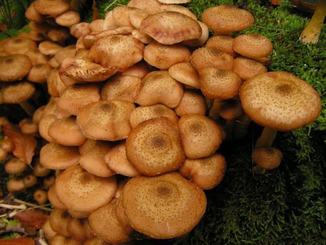 есть ли грибы в Подмосковье 2019 фото 16