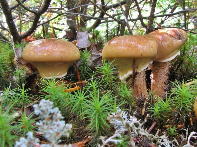 когда и куда пойти за грибами