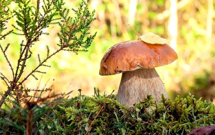 какие грибы можно собрать в Воронежской области
