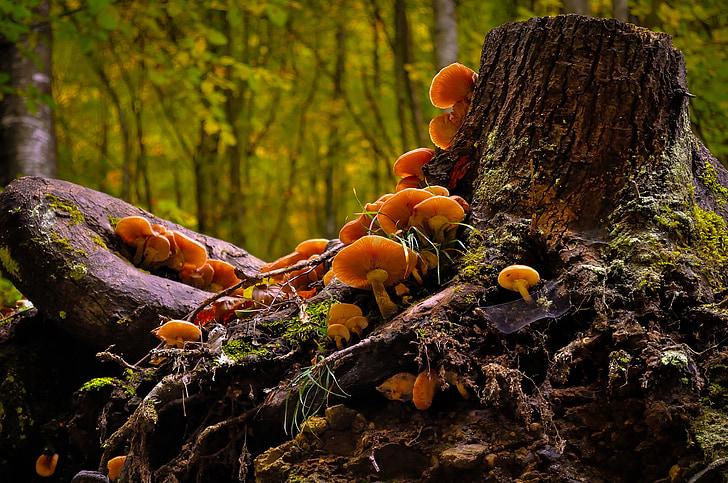 боры и леса Воронежской области со «злачными» грибными полянами фото 1