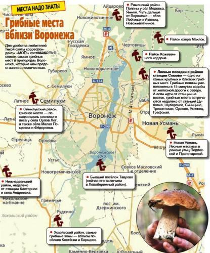 боры и леса Воронежской области со «злачными» грибными полянами фото 2