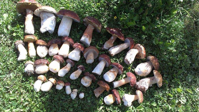 пошли ли грибы, что пишут на форуме фото 1