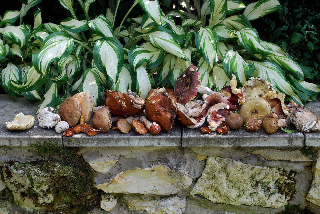 пошли ли грибы, что пишут на форуме фото 3