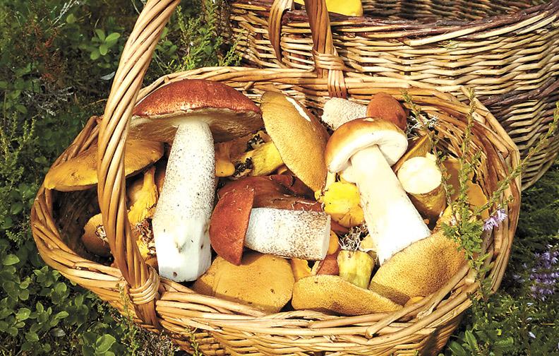 пошли ли грибы, что пишут на форуме