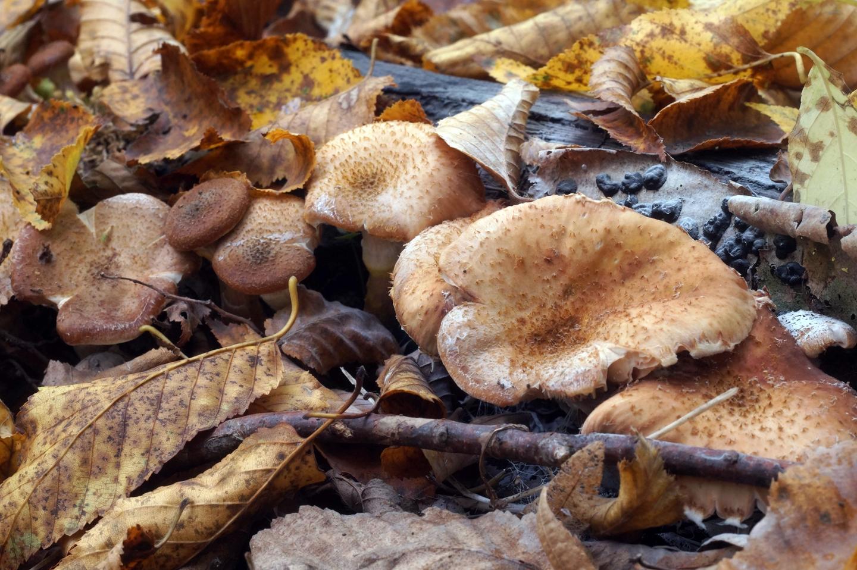 грибы октябрь 2019 - грибной сбор