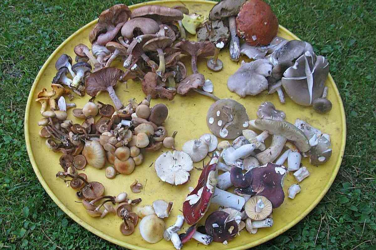 грибы в Карелии фото 1