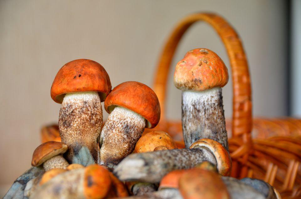 грибы в Карелии фото 2