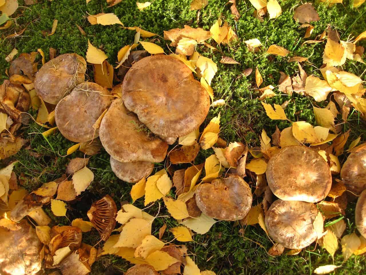 октябрь 2019 – грибы в Липецкой области фото 1