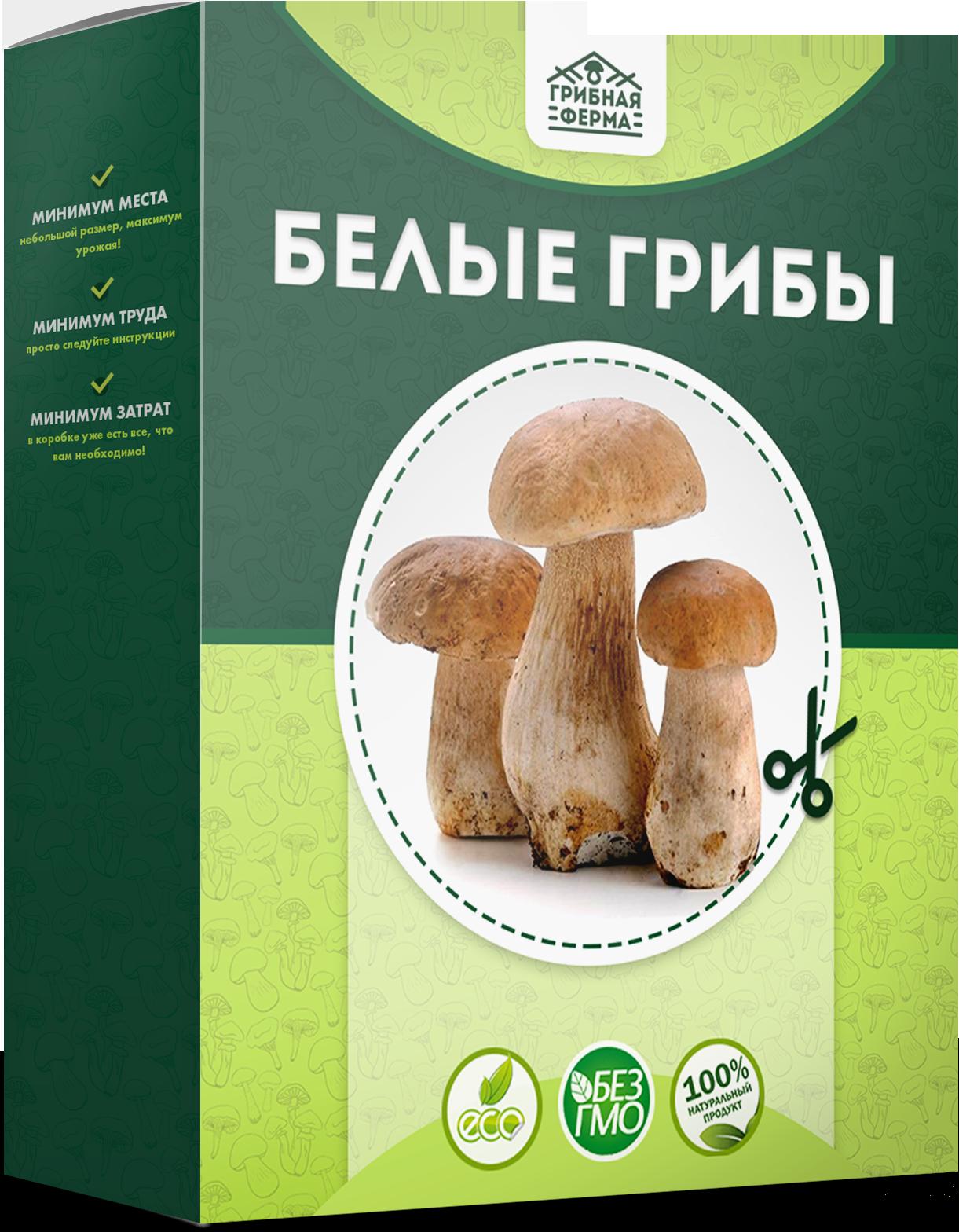 белые грибы отзывы