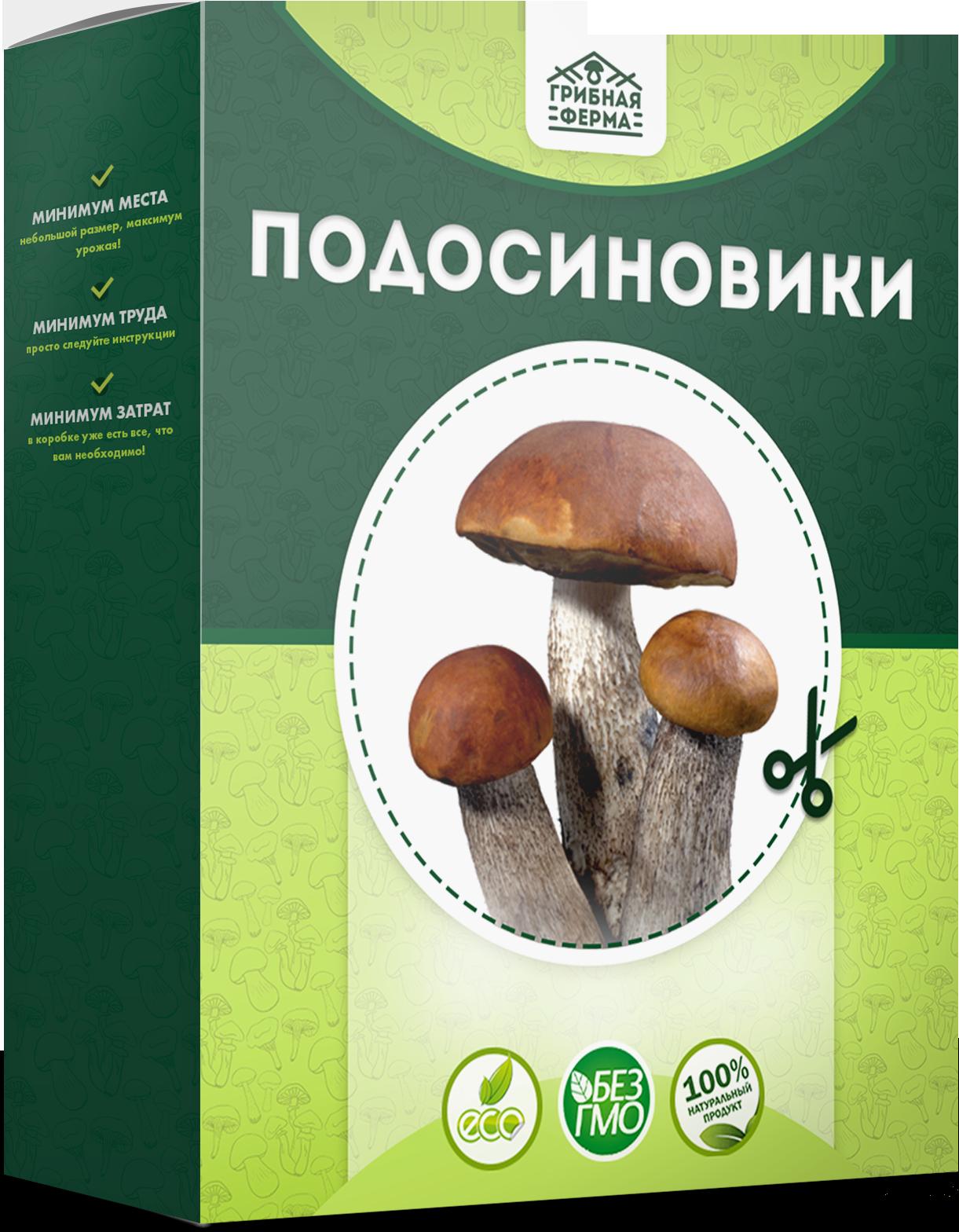 реальные отзывы о грибах в грибной корзине, выращенных в домашних условиях + фото 1