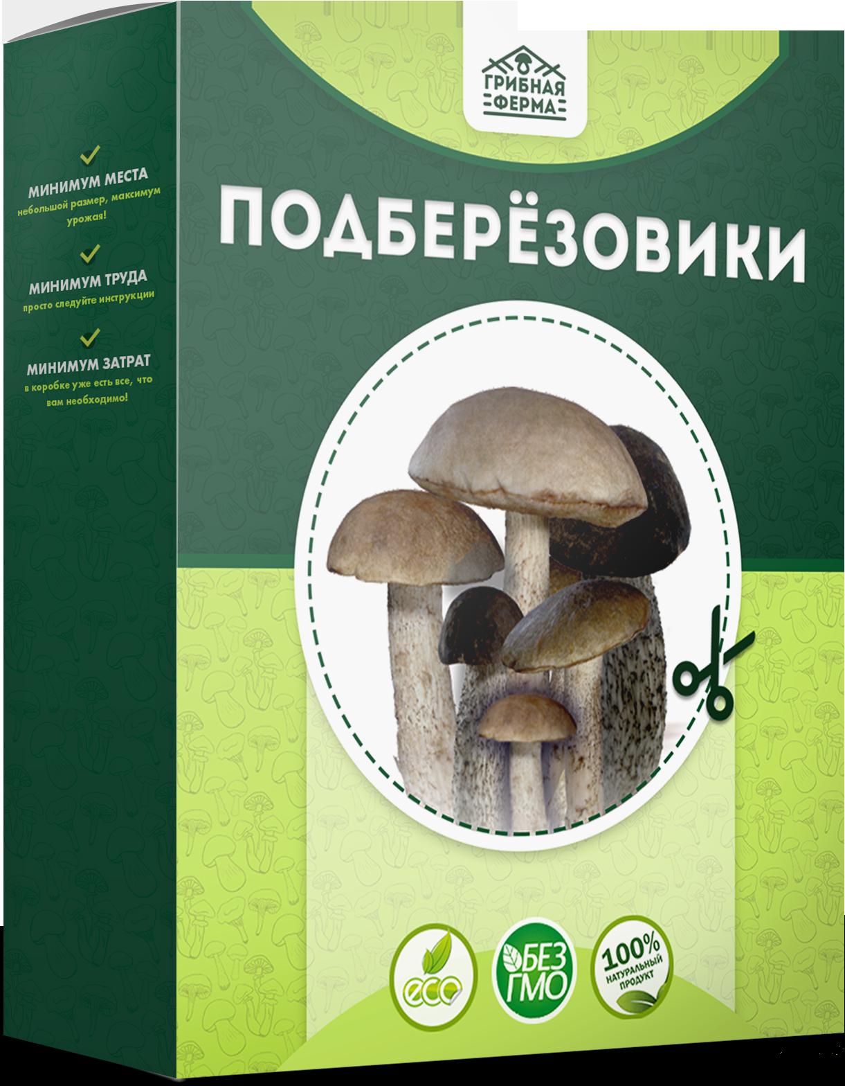 реальные отзывы о грибах в грибной корзине, выращенных в домашних условиях + фото 2