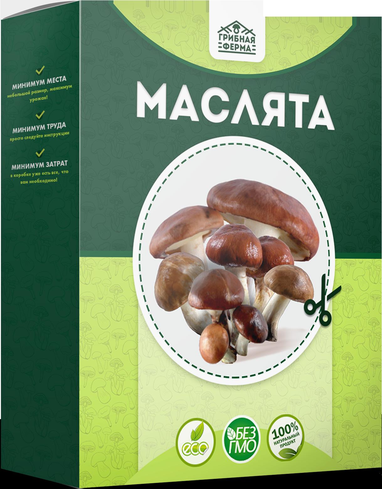 реальные отзывы о грибах в грибной корзине, выращенных в домашних условиях + фото 4