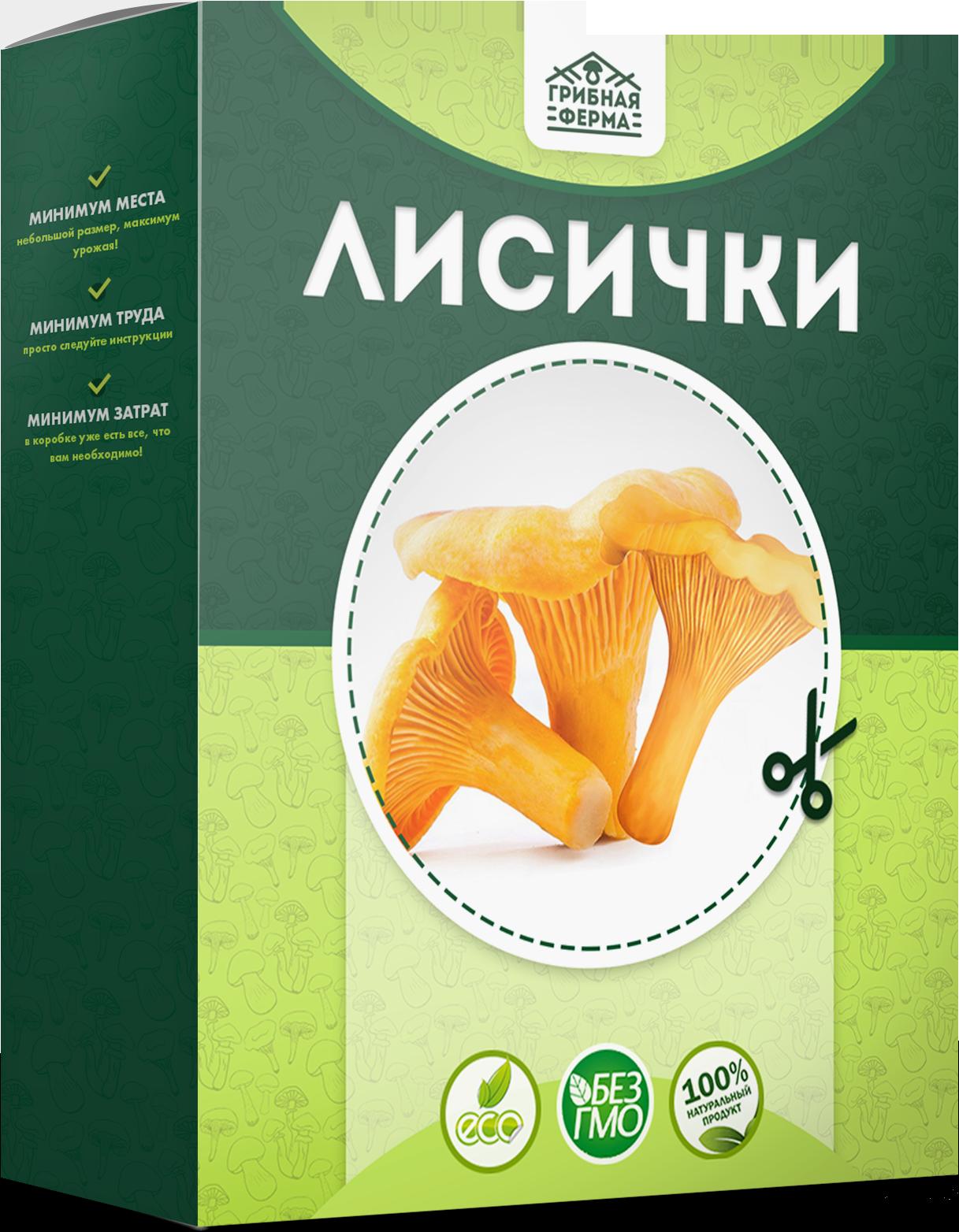 реальные отзывы о грибах в грибной корзине, выращенных в домашних условиях + фото 5