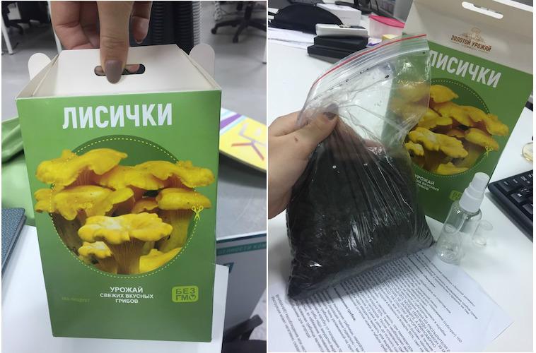 реальные отзывы о грибах в грибной корзине, выращенных в домашних условиях + фото 7