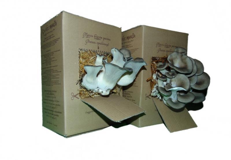 описание коробки: состав и компоненты фото 2