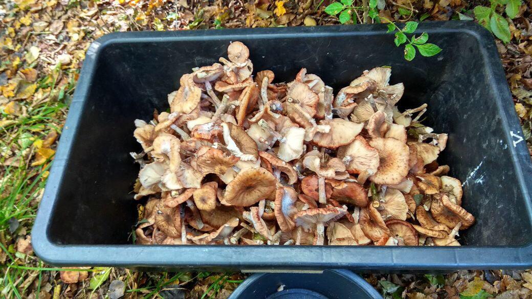 фото грибного улова 3