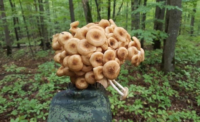 фото грибного улова 2