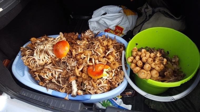 фото грибного улова 1