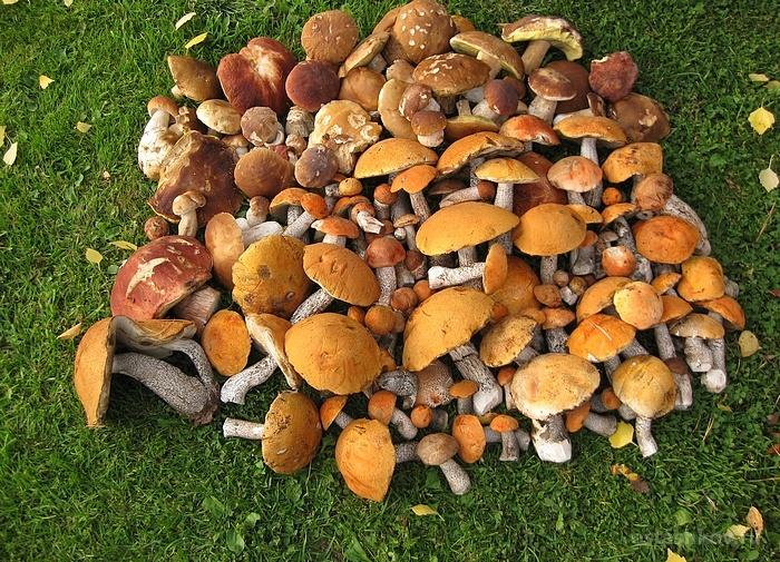 Тихая охота грибы сентябрь-октябрь 2020
