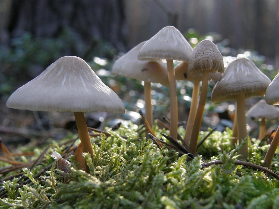 ядовитые грибы - опасно фото 3