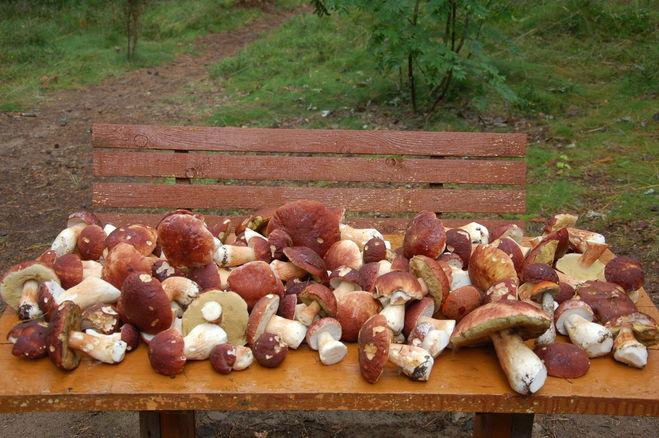 съедобные и ядовитые грибы Карелии 2019
