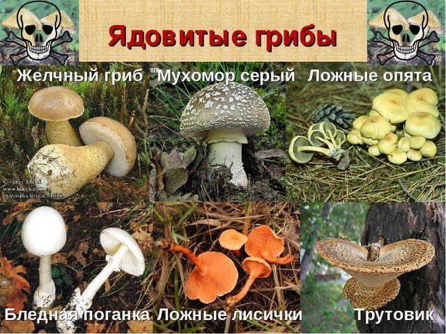какие ядовитые грибы встречаются