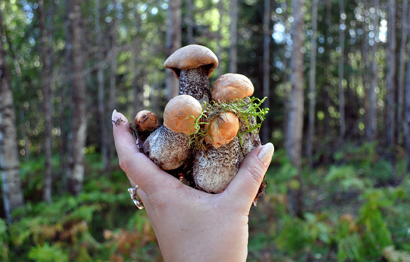 съедобные грибы в Карелии 2019, фото 6