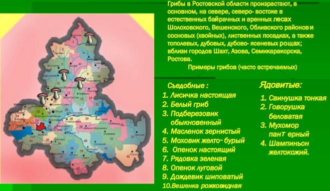 грибники ростовской области