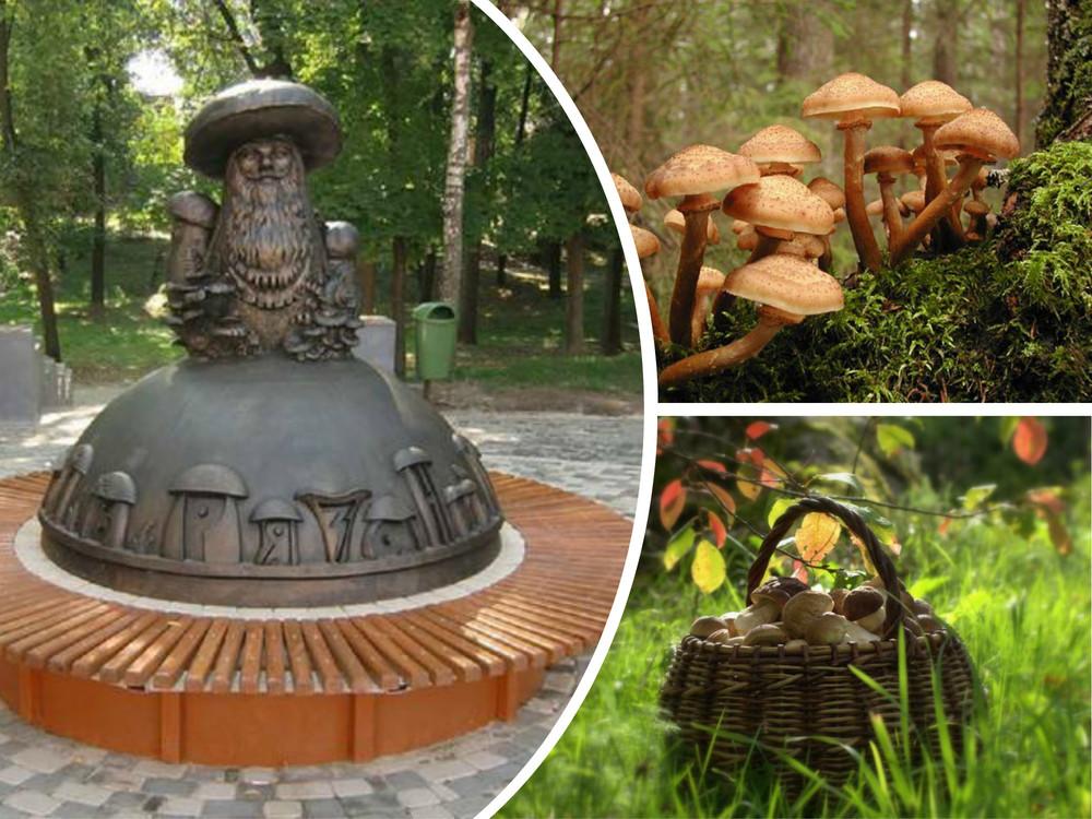 Грибные места и грибы 2020 Рязанской области