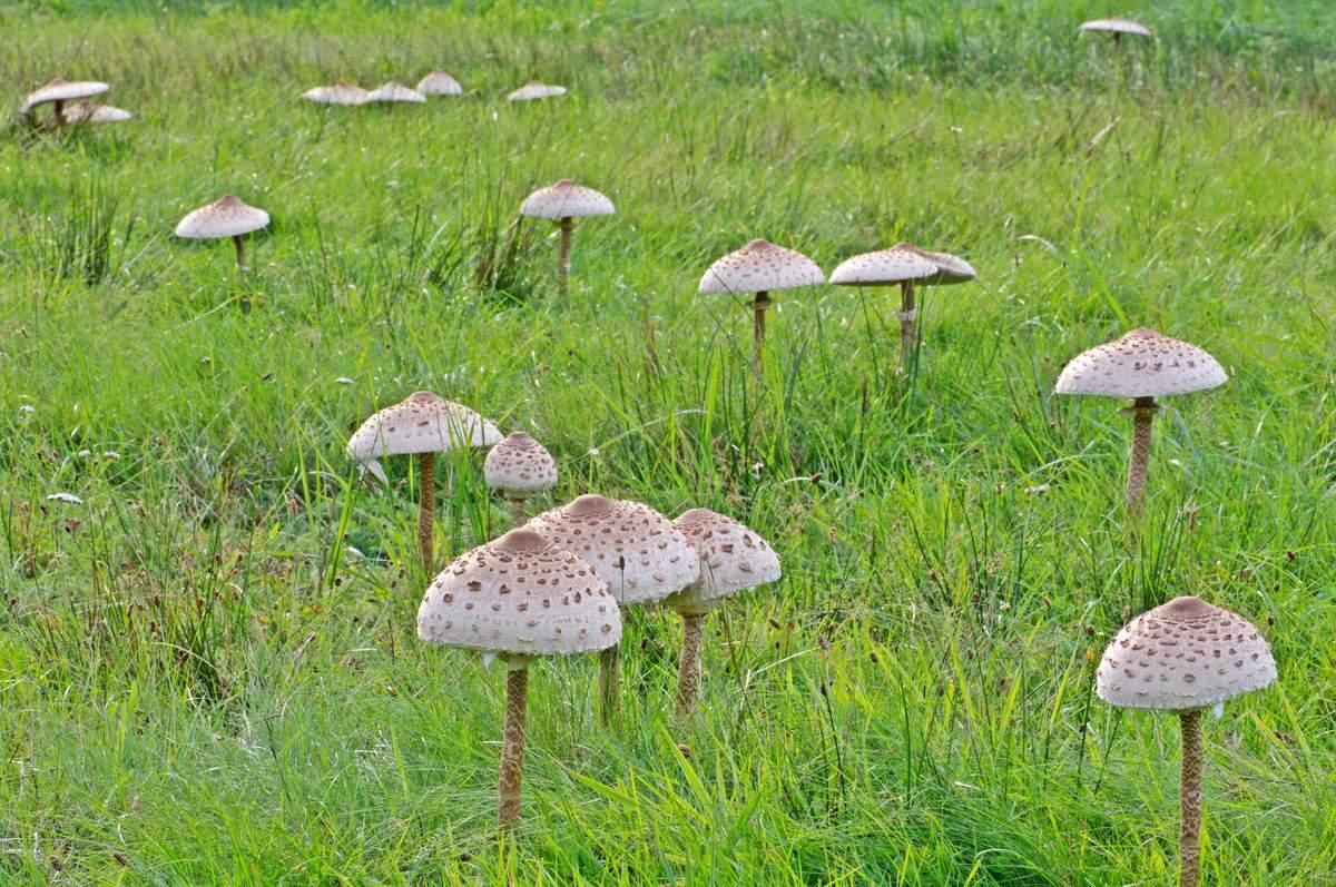 какие грибы растут в Рязани фото 9