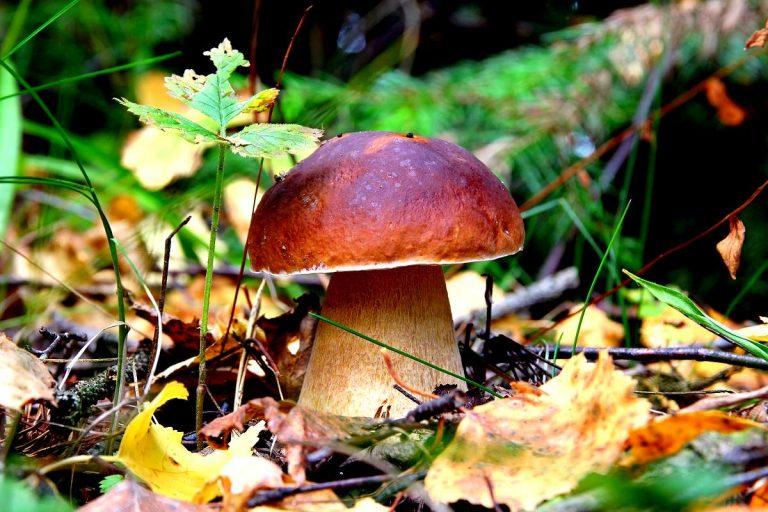какие грибы растут в Рязани фото 1