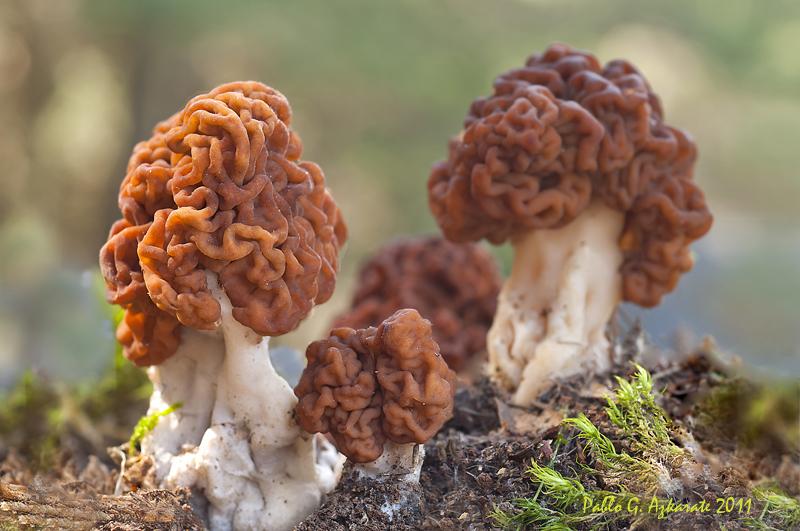 какие грибы растут в Рязани фото 8