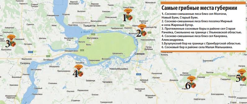 грибные места и карта Самарской области фото