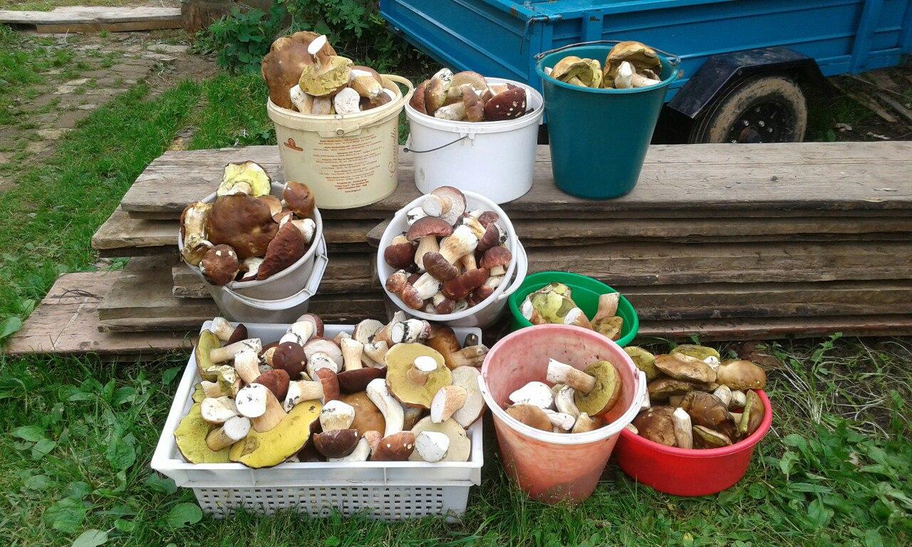 какие грибы растут фото 2