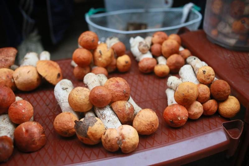 съедобные грибы в Самарской области фото 4