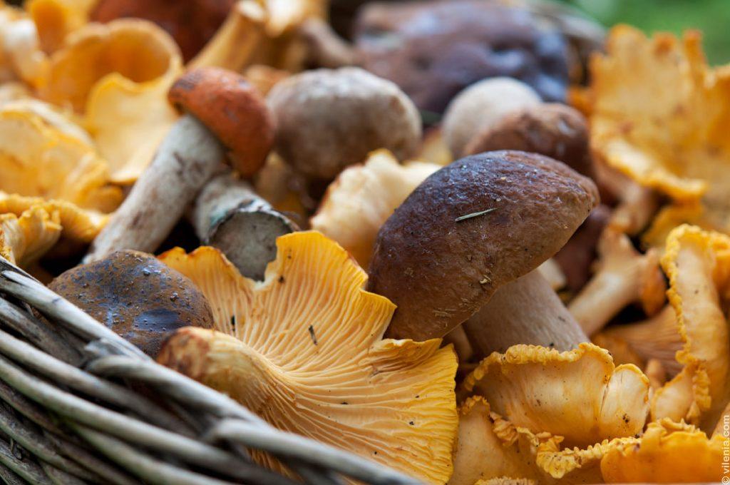 съедобные грибы в Самарской области фото 1