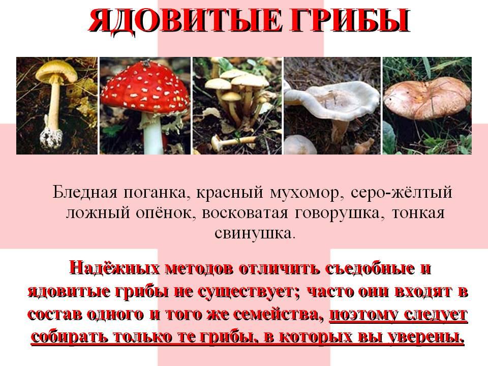 ядовитые грибы Самарской области