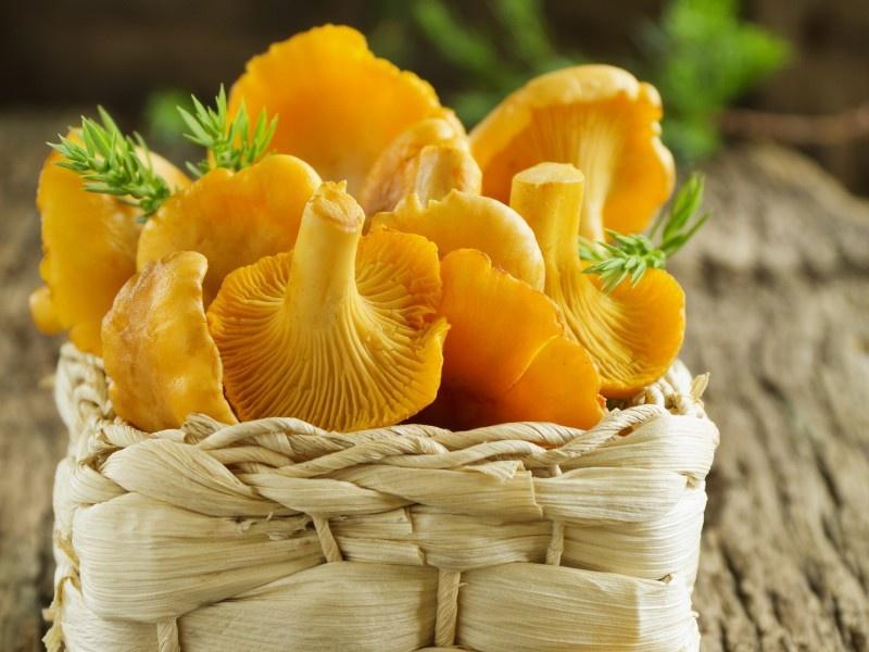 съедобные грибы фото 9