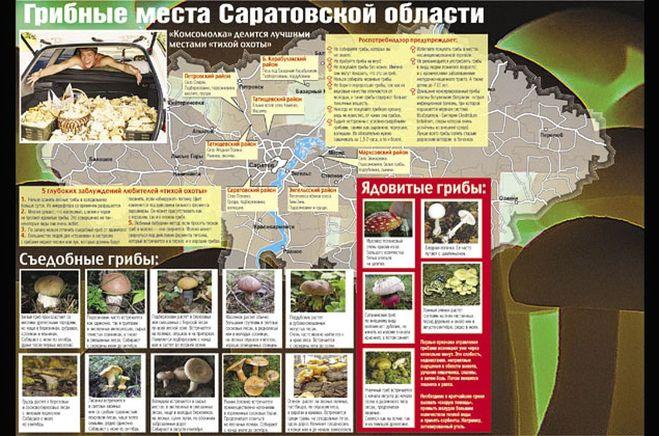 грибные места на карте Саратовской области 2019, фото 1