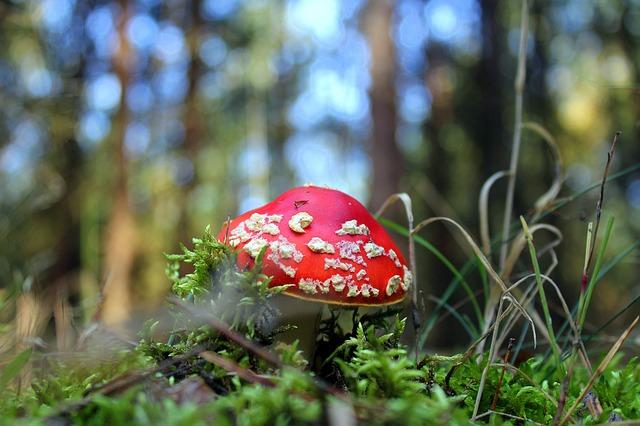 ядовитые грибы фото 2