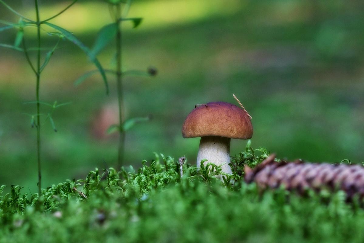 грибы и грибные места Тульской области 2019