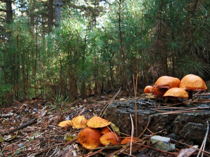 Грибы и грибные места 2020 в Тверской области