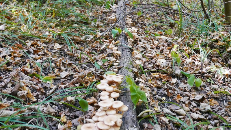 грибы и грибные места 2019 Ульяновской области