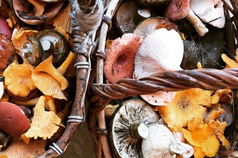 Грибы и грибные места 2020 Ярославской области