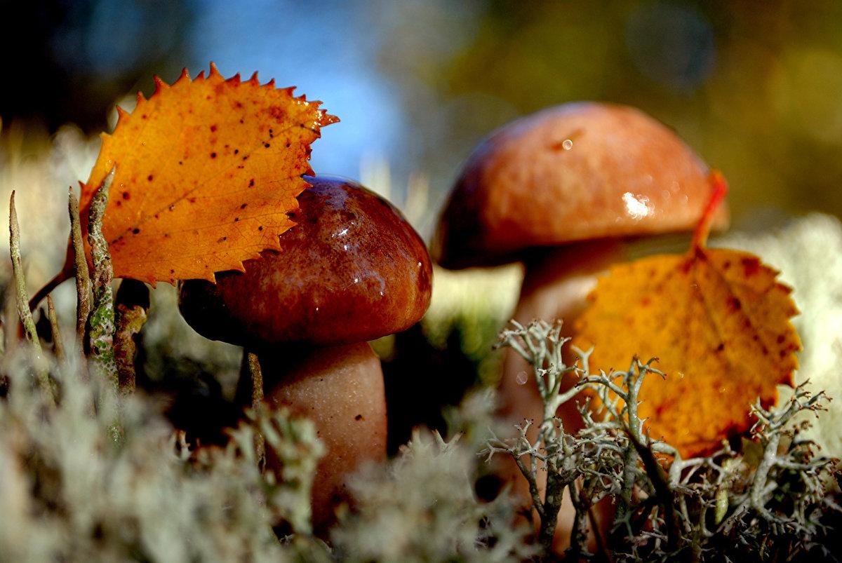 осенние грибы фото 1