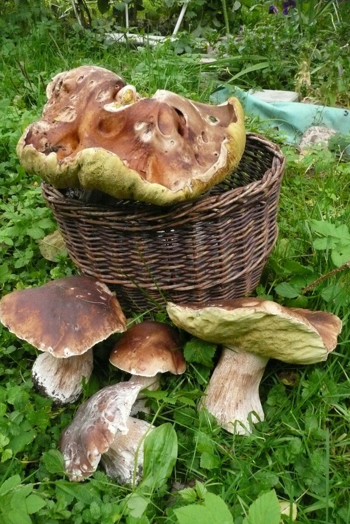 осенние грибы фото 2