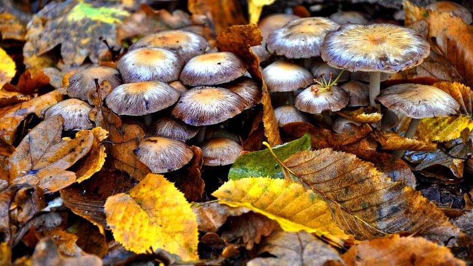 осенние грибы фото 4