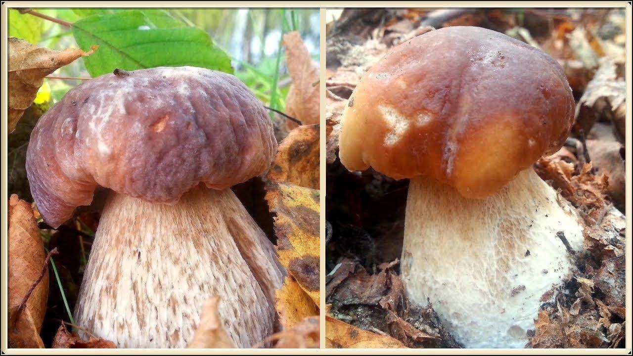 какие грибы можно собрать