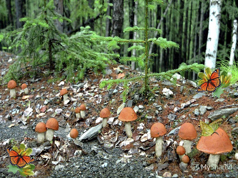 какие грибы можно собрать фото 1